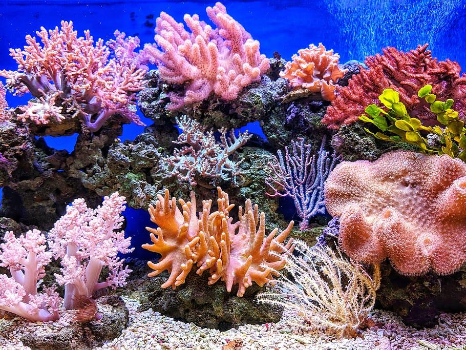 Arrecifes de coral y su blanqueamiento